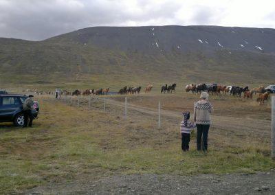 horse roundup1