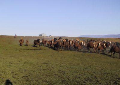 horse roundup2